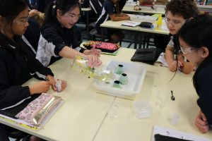 Year 6 Science Volcano Experiment