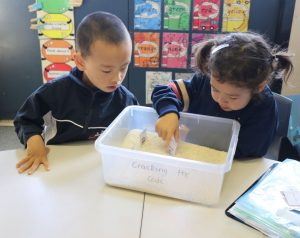 cracking the code campbell primary school